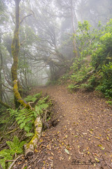 Senderos de Anaga (alberto reina correa) Tags: fog niebla sendero anaga