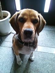 Puppy (am0219) Tags: japan ibarakiprefecture tsuchiurashi flickrandroidapp:filter=none shimotakatsu4chome