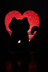 Cuore di gatto (Lara.Massa) Tags: stilllife canon torino italia colore piemonte rosso gatto cuore nero luce coda contrasto baffi canavese rivarossa laramassa
