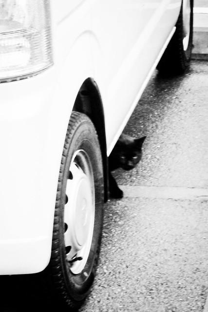 Today's Cat@2012-03-18