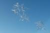 IJskristal op abri (Olga and Peter) Tags: ijskristal icecristal