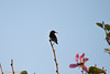 IMG_7320L4 (Sharad Medhavi) Tags: bird canoneod50d birdsandbeesoflakeshorehomes