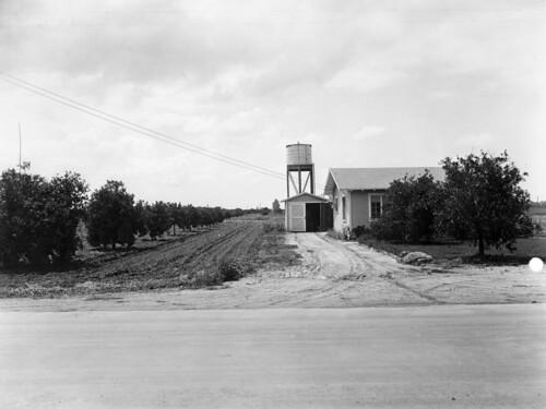 Orange County Houses House And Orange Grove