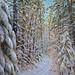 Sandra Hildreth - Fresh Snow