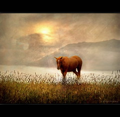 A Horse with no Name (h.koppdelaney) Tags: life horse mist art digital photoshop sunrise symbol dream picture philosophy alm metaphor dreamlike lucid psyche symbolism psychology archetype koppdelaney