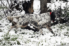 Camuflaje. (Albert Simn) Tags: dog pet white snow blanco animal nieve perro mascota camuflaje