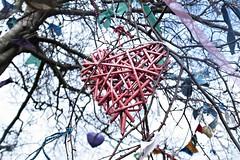 red heart (Ta King) Tags: heart ricoh ricohgrd grd3 grdiii