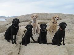 050/366 A hike and a swim (PamK*) Tags: lake dogs water swim labrador retriever ourdailychallenge dailydogchallenge
