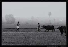 A Morning Stroll !!! (bmahesh) Tags: morning people blackandwhite india mist rural village earlymorning chennai mahesh tamilnadu cwc thirumazhisai chennaiweekendclickers canon550d bmahesh cwc136b