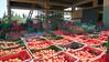Fresh harvested tomato waiting outside for processing = Tomates fraîchement cueillies attendant en plein air leur transformation