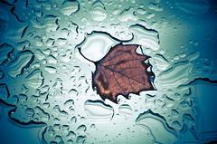 Leaf on Glass (Orbmiser) Tags: winter water glass oregon portland leaf nikon raindrops d90 55200vr
