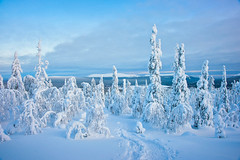 Fairytale (Thierry Hennet) Tags: blue winter white snow tree zeiss landscape frozen finnland sony scenic lapland cloudysky tranquilscene kslompolo a900 coldtemperature cz2470mmf28