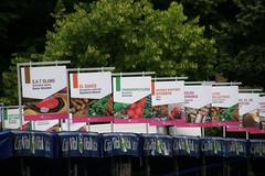 Feria de Santiago_2