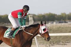 حصان - Horse 4 (Mazen_Alghamdi) Tags: canon 75300 mazen مسابقة سباق حصان 550d الخيل كانون خيول الغامدي مازن الجبيل alghamdi الصناعية احصنة