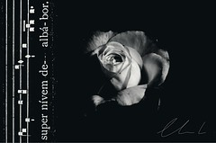 ... et super nivem dealbabor [Ps 51 ex Gradualem simplicem & rose bourboniana Boule de Neige ] (dClaudio [homofugit]) Tags: blackandwhite bw snow flower rose rosa neve fiori chant gregorian nives allegri psalm51 bouledeneige miserere gregoriano mitate mygearandme salmo51 gradualesimplex