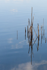 Up And Down (unluckypixie) Tags: reflection water reeds mirrorimage