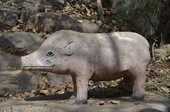 Lakshmi Narayan Mandir Pig