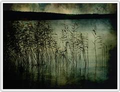 Sunset (Aviones Plateados) Tags: light sunset sea sky lake luz sol crimson lago twilight pond shadows sundown contest aerial honey katebush estanque puesta ocaso sombras blackbirds fishpeople