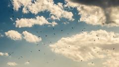 Spots on the sky (- MAGA -) Tags: blue sky sun color birds clouds canon fly cielo nubes animalplanet pjaros ilobsterit