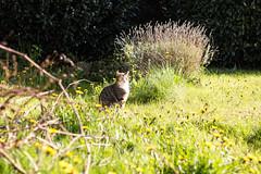 IMG_3291 (marcgronenberg) Tags: camera cute grass cat canon garden photo dof sweet gras katze dslr omg garten naute 650d