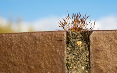 Life finds a place everywhere (rscholle) Tags: moss natur pflanzen moose