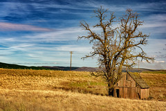 Is There Anybody Out There? (KPortin) Tags: tree abandoned field barn pinkfloyd douglascounty abandonedbarn