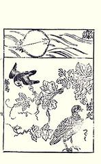 Bottom  dishrag gourd, Eurasian oystercatcher and dusky thrush (Japanese Flower and Bird Art) Tags: flower bird japan japanese book picture gourd oystercatcher anonymous eurasian dusky thrush woodblock cucurbitaceae turdus dishrag ukiyo haematopus ostralegus luffa turdidae naumanni haematopodidae cylindrica readercollection