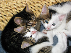 The Cute trio (Matja Skrinar) Tags: 100v10f kittenmagazine