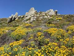Blue and yellow landscape (LOLO Italiana) Tags: ca nature landscape carmel yellowflowers springtime rockformations ribera beautyinnature carmelmeadows blueskiesbehind