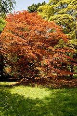 _Contrast_DSC06778 (Ian Gearing) Tags: park uk trees england west nature woodland arboretum gloucestershire westonbirt trust glos