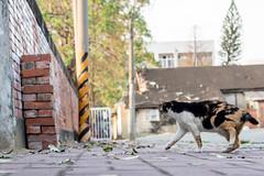 P4085782 (daisuke1230) Tags: cat olympus neko em  m43