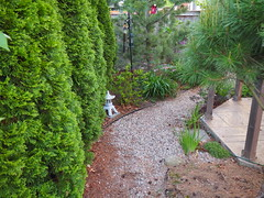 Garden Snapshot June 1, Path behind Gazebo (JP Newell) Tags: garden path gravel woodland tanyosho pine cedars emeral green