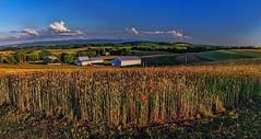 IMG_8780-81Pt2zl1TscBbG (ultravivid imaging) Tags: ultravividimaging ultra vivid imaging ultravivid colorful canon canon5dmk2 fields farm rural scenic clouds barn