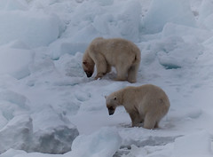 P1110800 (TallGrass-IA) Tags: snow nature norway lumix panasonic svalbard arctic micro g6 43 linblad 1235 expeditions mirrorless