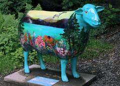 Amazing Grace (Cumberland Patriot) Tags: park wood mill car saw amazing sheep painted go grace cumbria trust calvert dodd ewe cumbrian herdwick goherdwick