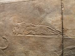 Royal Lion Hunt 2 (D. S. Hałas) Tags: uk greatbritain england sculpture london unitedkingdom camden relief bloomsbury britishmuseum middlesex nineveh assyria halas unitedkingdomofgreatbritainandnorthernireland hałas ancientassyria royallionhunt