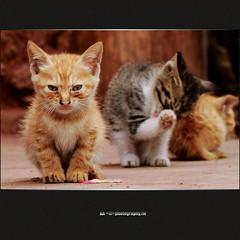 Alley Kitten (AA Dagital Photography) Tags: bestcapturesaoi asquaresuperstarstemple