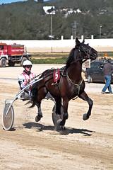 Carrera de  trotones  -3- (ibzsierra) Tags: horse race canon caballo course ibiza 7d eivissa trot carrera baleares chevaux trotting digitalcameraclub torton