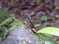 Wild life in Sinharaja Rain Forest Sri Lanka