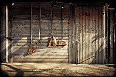 tools of the trade (TheOtherPerspective78) Tags: vienna wien barn yard island rust box decay stall brush tools shack rost holz pferde stable tr danube broom stables donauinsel scheune verfall werkzeug heugabel lobau stallung ef3520 theotherperspective78