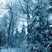 Paysage d'hiver 2