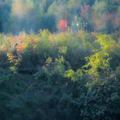 Premier jour d'automne au marais...!!! (Denis Collette...!!!) Tags: autumn canada fall forest marais arbre marshland fret provincedequbec arbuste arbrisseau deniscollette img62512 comtdeportneuf villedepontrouge