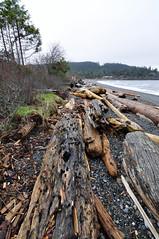 Sandwell Provincial Park (Barbara A. White) Tags: beach britishcolumbia shoreline pebbles driftwood gabriolaisland oldgrowth sandwellprovincialpark