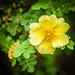 Flowers & Plants - Botanic Gardens (Dublin)