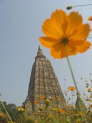 Mahobodi temple 2 (Shaun D Metcalfe) Tags: india flower temple petals buddhist monk nun tibetan enlightenment bihar bodhgaya mahabodhi earthasia blinkagain
