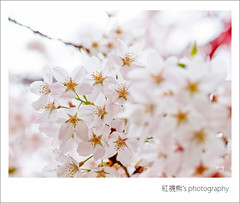 ... ( ()) Tags: macro 50mm bokeh olympus sakura zuiko e30  alishan      alishannationalforestrecreationarea