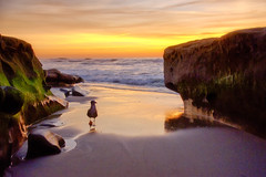 Hello (mojo2u) Tags: ocean california sunset beach sandiego seagull lajolla nikond700 nikon28300mm