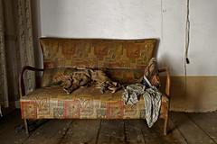 no more asses on this sofa (Gabriele Kahal) Tags: abandoned lost ruins decay urbanexploration urbana gabriele verlassen rovine urbex abbandono esplorazione kahal esplorazioneurbana nibbach gabrielekahal
