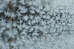 Frosty Frozen Frost 2 (MiK7124) Tags: winter cold window frost down frostywindow downfeather fujifilmfinepixs9600