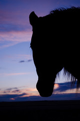 Silhouette at Sunset (C-Dals) Tags: sunset sky horse silhouette nikon morgan nikkor r20 1855mmf3556gvr d5100 getpushed